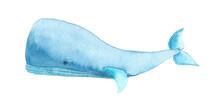 Watercolor Blue Whale. Hand Drawn Illustration Of Big Underwater Mammal Animal. Isolated Object On White Background. Marine And Ocean Fauna