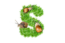 The Letter S Is Made Of Grass And Snails