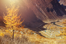 Trees, Covered With Yellow And Scarlet Leaves, On Which Falls Warm Light Of The Setting Sun, High In The Mountains. Autumn Village Scene.