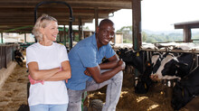 Positive Female And Male Proffesional Farmers Standing Near Cow At Farm