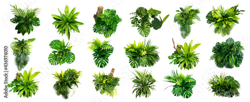 Foto Green leaves of tropical plants bush (Monstera, palm, rubber plant, pine, bird's nest fern) floral arrangement indoors garden nature backdrop isolated on white background thailand, clipping path