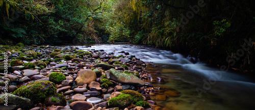 Foto Rain forest steam