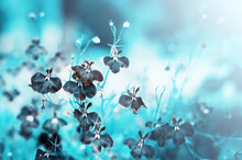 Flowers On A Beautiful Blue Background. Blurred Delicate Blue Background. Romantic Soft Delicate Artistic Image.