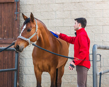 Young Jockey Brushing Chestnut Horse In Stable