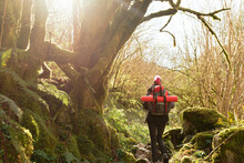 Unrecognizable Backpacker With Rucksack Walking In Forest
