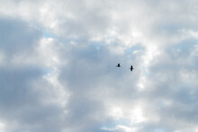 Silhouettes Of Two Birds Cranes With With Open Wings On A Blue Sky With White Clouds