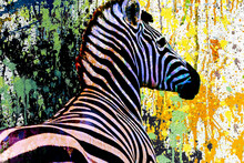 Colorful Artistic Zebra Muzzle With Bright Paint Splatters On Dark Background.