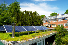 Solar Panels On A Green Roof With Flowering Sedum Plants