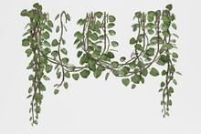Realistic 3D Render Of Liana Plants