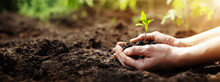 Woman Hands Taking Care Of A Seedling In The Soil.