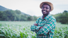African Farmer With Hat Stand In The Corn Plantation Field.Agriculture Or Cultivation Concept