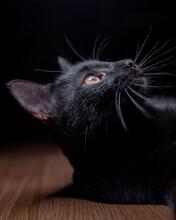 Curious Black Cat Lying On Floor