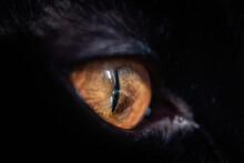 Black Cat Eye Staring Away Attentively