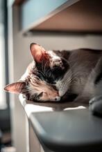 Adorable Cat Sleeping On Stool In Daylight
