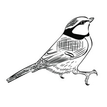 Blue Tit (Parus Caeruleus) Isolated On A White Background. Cute Vector Sketch Illustration Of A Bird For Design, Decor And Ornithological Books And Magazines.
