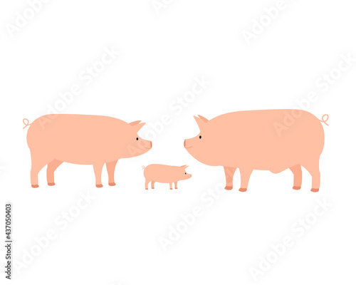 Family of farm domestic pig, mom dad and piglet Fotobehang