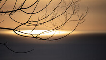 Tree Silhouette In Front Of A Sunset View