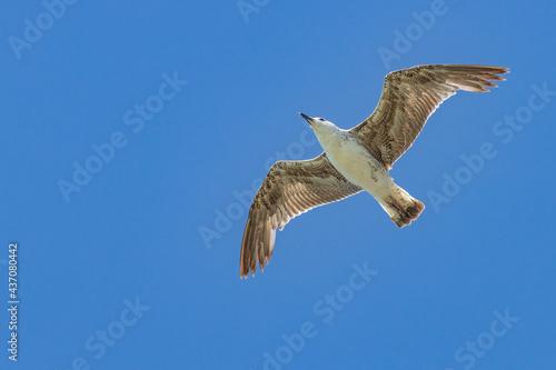 Slika na platnu gabbiano in volo