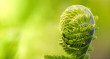 Green Leaf Of Fern On A Light Green Background, Selective Focus