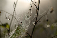 Spider Web With A Small Spider And Dew Drops With Sunlight And Reflections And Soft Bokeh In The Background