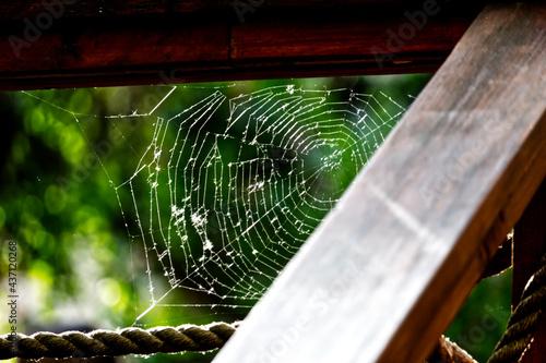 pajęczyna
