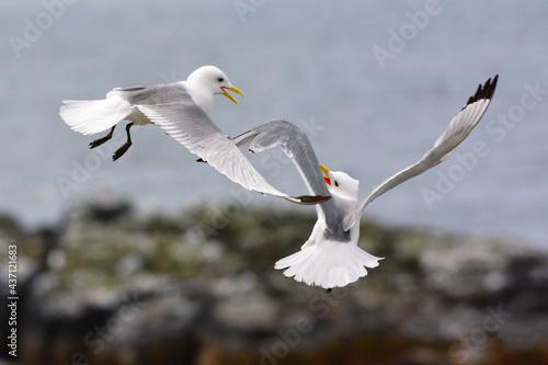 Fotografija Gabbiani in volo