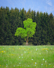 Vertical shot of a fresh green tree in front of a forest and a meadow in foreground