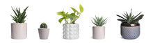 Set With Different Beautiful Houseplants On White Background. Banner Design