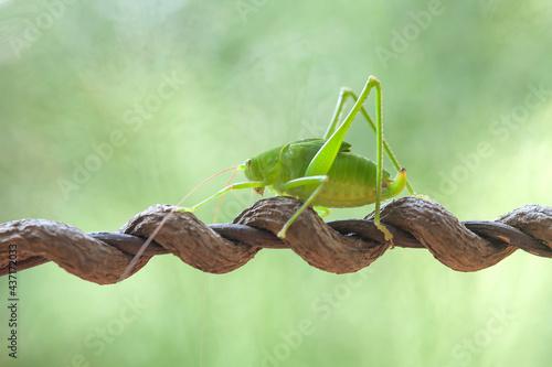 Obraz na plátně Story of Animal Insect in Wildlife