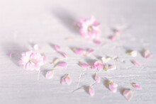 Pink Flowers On A Snow