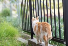 猫の後ろ姿 茶白猫