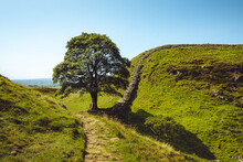 Sycamore Gap Northumberland. Hadrians Wall Built On Tall Cliffs Roman Wall On A Sunny Summer Day