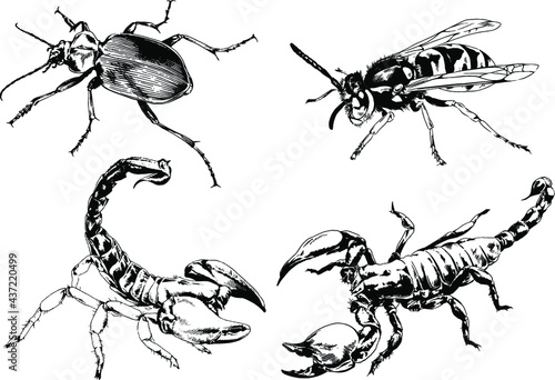 Canvas Print vector drawings sketches different insects bugs Scorpions spiders drawn in ink b