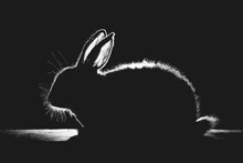 Silhouette Of A Fluffy Rabbit In The Rays Of Sunlight