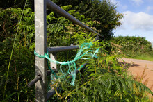 Green String Tied To Over Grown Metal Gate In Hedge