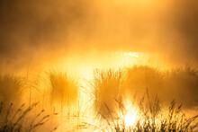 Misty Morning At The Flooded Wetlands Pond During Sunrise Hours. Summertime Scenery Of Northern Europe.