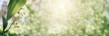 Lily Of The Valley In Bloom On Green Bokeh Background, Spring And Summer Flowers Banner