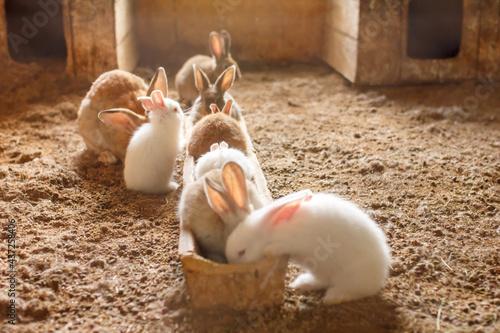 Vászonkép rabbits on the farm in the aviary