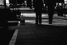 People Walking In The Street Dog