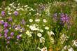 Flower power im Elsass im Frühling