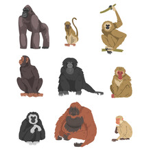 Monkey As Arboreal Primate And Simian Mammal Vector Set