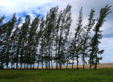 Wind In The Trees At Lake Saint Lucia, KwaZulu-Natal, South Africa