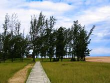 Trees And Path At Lake Saint Lucia, KwaZulu-Natal, South Africa
