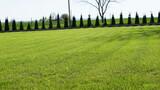 Wiosenny trawnik i krzewy wokoło domu z dala od miasta