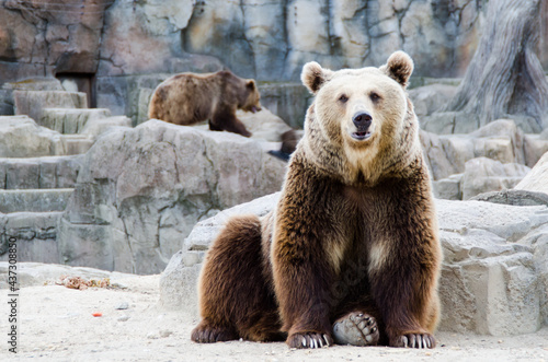 Foto osos grizleis en cautividad enormes