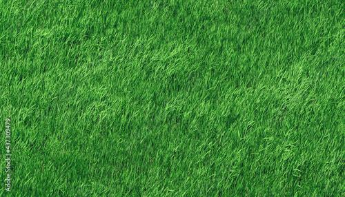 Fotografie, Obraz green grass field close up