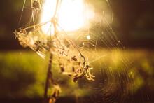 Spider Net In Sunset