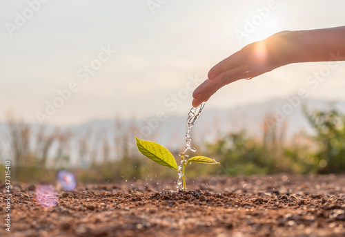 Canvastavla Hand nurturing and watering young baby plants growing in germination sequence on