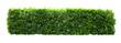 Leinwandbild Motiv Tropical Flower shrub bush fence tree isolated  plant with clipping path