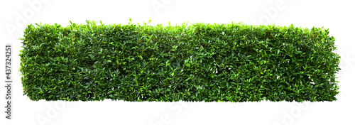 Canvas-taulu Tropical Flower shrub bush fence tree isolated  plant with clipping path